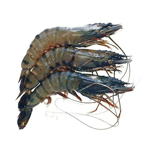 Tiger Prawn Whole 虎虾 (整) 31/35 (700g)/Pek